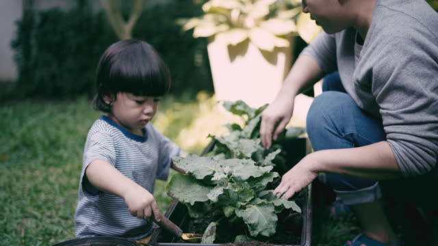 Teaching Child boy to grow vegetables video