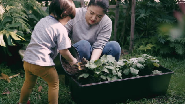 Teaching Child boy to grow vegetables Mother Teaching Child boy to grow vegetables at home vegetable garden stock videos & royalty-free footage