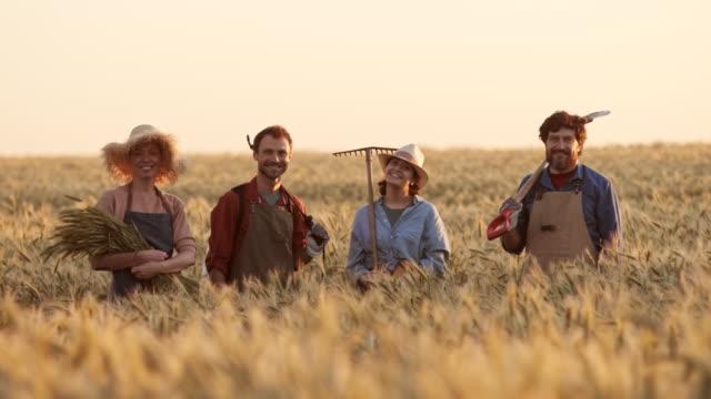zespół rolników w pszenicy złożony na zachód słońca - four seasons filmów i materiałów b-roll