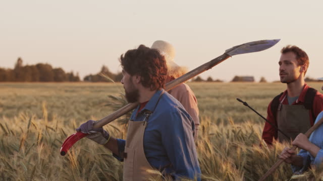 team of gardeners going along wheat filed - four seasons filmów i materiałów b-roll
