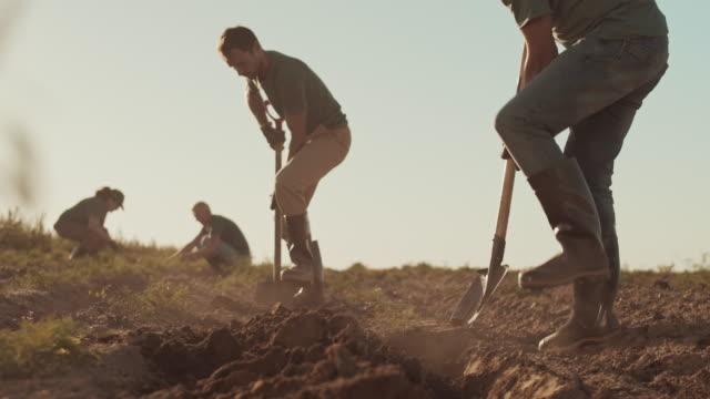 team of gardeners working in field - four seasons filmów i materiałów b-roll