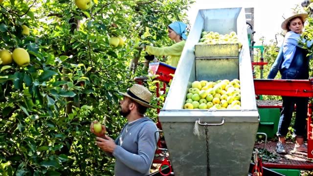 Team van professionele arbeiders oogst appelen video