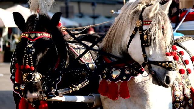 team von zwei dekorierten pferden für reittouristen - krakau stock-videos und b-roll-filmmaterial