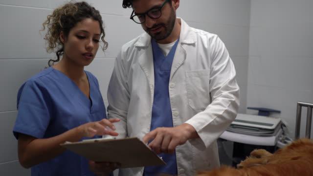 team av veterinärer diskuterar något medan du tittar på den medicinska rekord av inlagd hund - veterinär, undersökning bildbanksvideor och videomaterial från bakom kulisserna