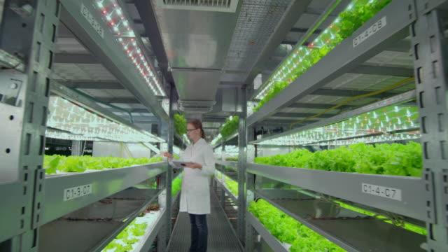 teamarbeit von agronomen biologen die kamera bewegt sich entlang des korridors eines modernen bauernhofes, zeigt die arbeit von wissenschaftlern, die pflanzen in einer verschmutzten umgebung einer modernen stadt. - gewächshäuser stock-videos und b-roll-filmmaterial