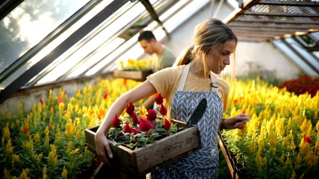 teamwork in greenhouse - serbia video stock e b–roll