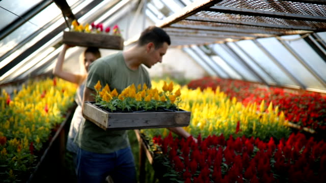 温室でのチームワーク - 花市場点の映像素材/bロール