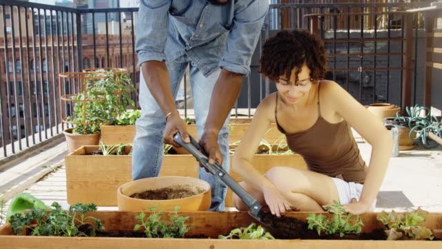 teamarbeit auf dachterrasse - urban gardening stock-videos und b-roll-filmmaterial