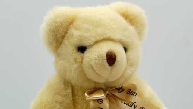 Teddy bear on a white background video