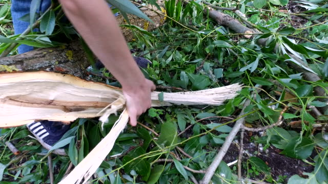 Teen boy detaches a piece of wood from the felled trees. video