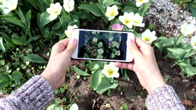 A teen boy making video or photo of tulip flowers using his smartphone in spring garden