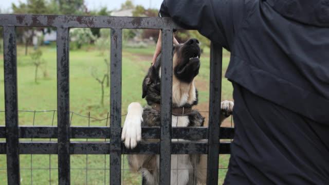 Teenage boy cuddling with his dog trough the gate