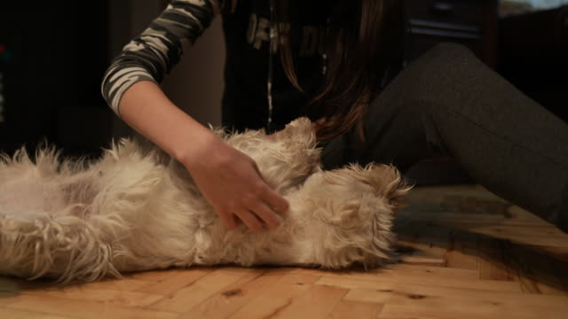 teenage girl with cute dog - terrier video stock e b–roll