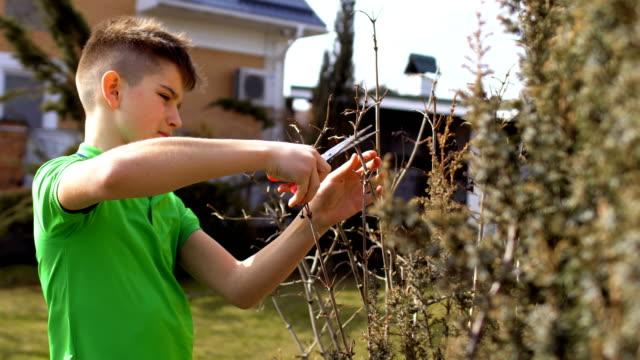 tonåringen skär torkade grenar av träd i trädgården - gren plantdel bildbanksvideor och videomaterial från bakom kulisserna
