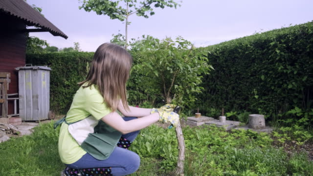 Teenager girl cutting and pruning the bonsai Teenager girl cutting and pruning the bonsai bush stock videos & royalty-free footage