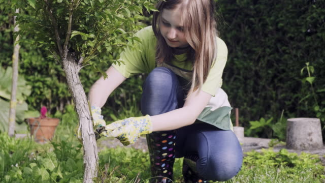teenager girl cutting and pruning the bonsai - куст стоковые видео и кадры b-roll
