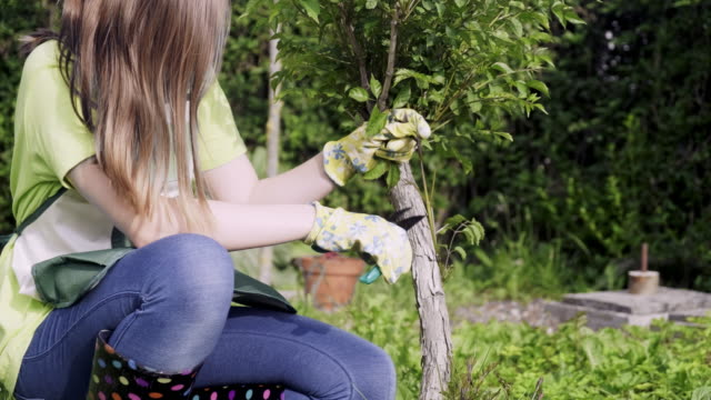 Teenager girl cutting and pruning the bonsai