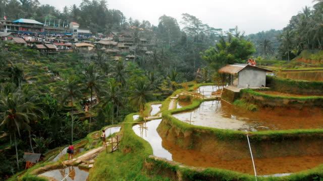 tegallalang 4k drone footage of rice terrace in bali - taras ryżowy filmów i materiałów b-roll
