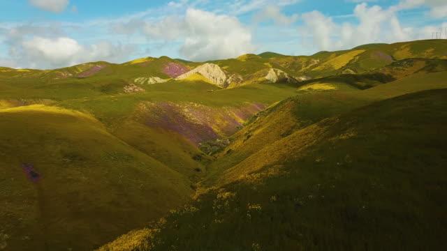 vídeos de stock e filmes b-roll de temblor range california wildflowers aerial - granadilha