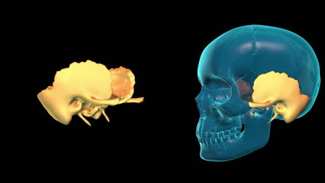 Temporal Bone video