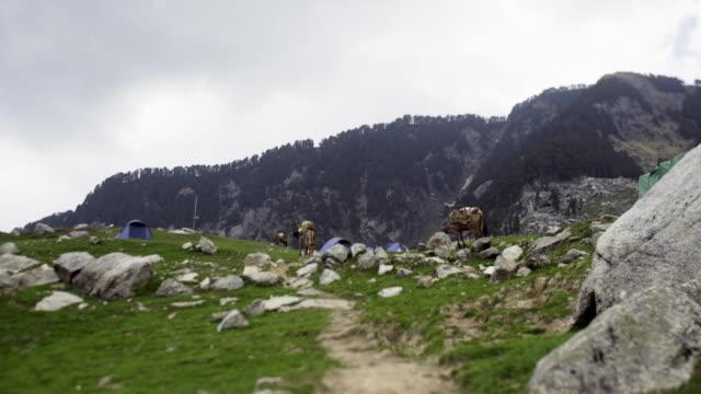 zeltlager mit entlasten maultiere in berg - himachal pradesh stock-videos und b-roll-filmmaterial
