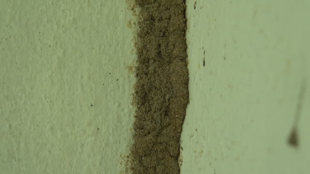 Termite mound at the wall Close-up termite mound at the cement wall isoptera videos stock videos & royalty-free footage