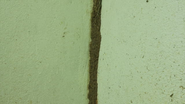 Termite mound on the wall Close-up termite mound on the cement wall isoptera videos stock videos & royalty-free footage