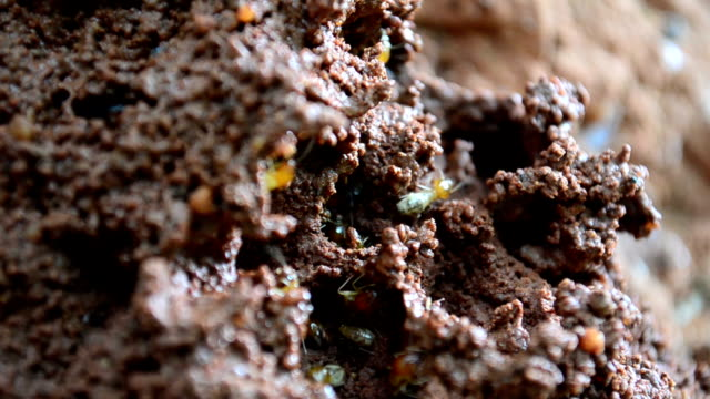 Termite nests. Termites are building a nest. isoptera videos stock videos & royalty-free footage