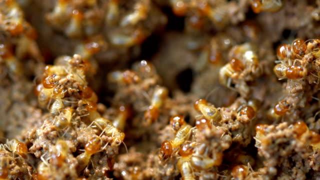 termites damage home - insetticida video stock e b–roll