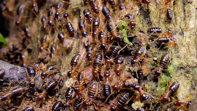 Termites in tropical rain forest. video