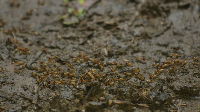 Termites parade on the forest floor. video