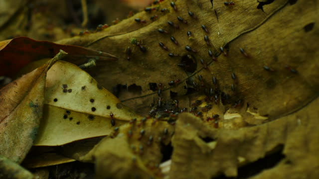 Termites Parade. Termites walking on the forest floor. arthropod stock videos & royalty-free footage
