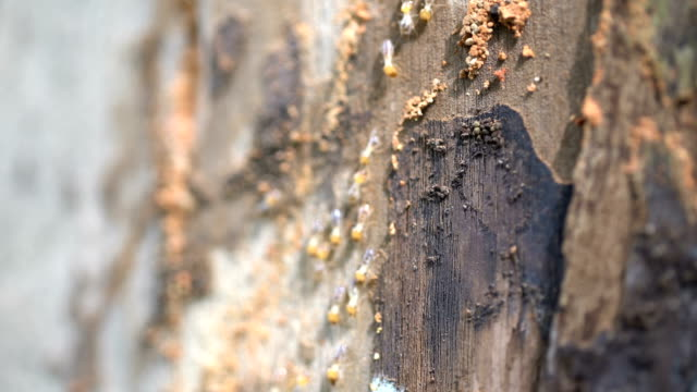 termites travel on the wooden tree video