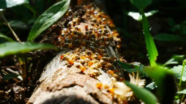 Termites Termites isoptera videos stock videos & royalty-free footage