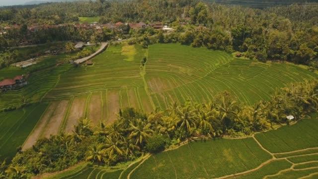 Terrace rice fields, Bali,Indonesia
