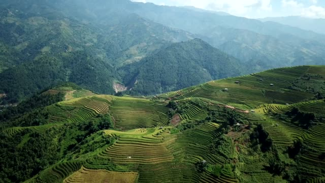terraced paddy fields  farm on hilly or mountainous terrain, normally farming in east, south, and southeast asia - индонезия стоковые видео и кадры b-roll