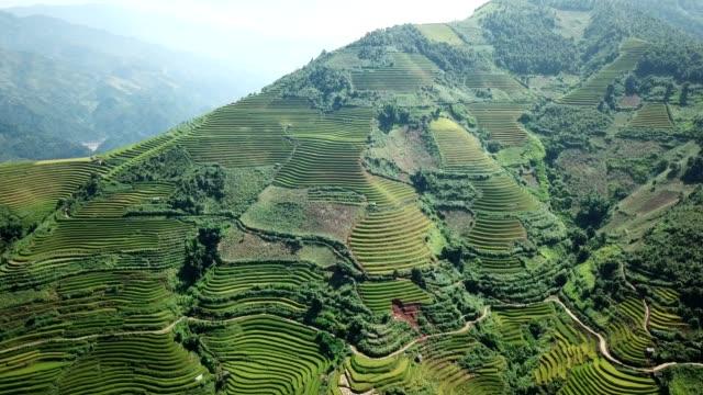 terraced paddy fields  farm on hilly or mountainous terrain, normally farming in east, south, and southeast asia - pole ryżowe filmów i materiałów b-roll