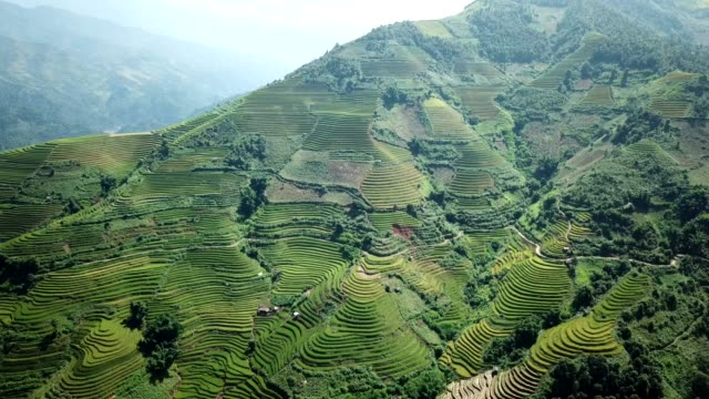 terrassierte reisfelder farm auf hügeligen oder gebirgigen terrain, normalerweise landwirtschaft in ost-, süd-, südost- und ostasiens - guilin stock-videos und b-roll-filmmaterial