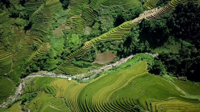 terraced paddy fields  farm on hilly or mountainous terrain, normally farming in east, south, and southeast asia - taras ryżowy filmów i materiałów b-roll