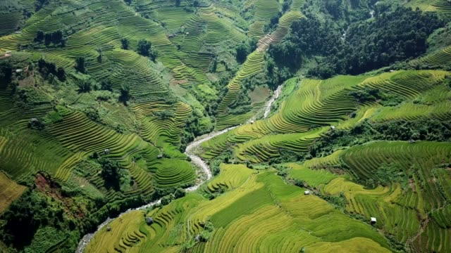 terraced paddy fields  farm on hilly or mountainous terrain, normally farming in east, south, and southeast asia - myanmar video stock e b–roll
