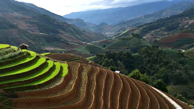 terraced rice field in Mu Chang Chai, Vietnam video