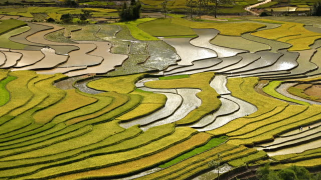 terraced rice field in Tule Village video