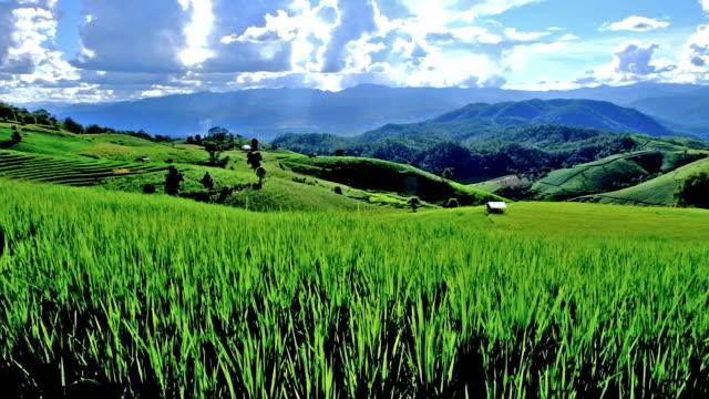 タイの北部チェンマイ県、山、pa ピンポン ピアン村の棚田 - 水田点の映像素材/bロール