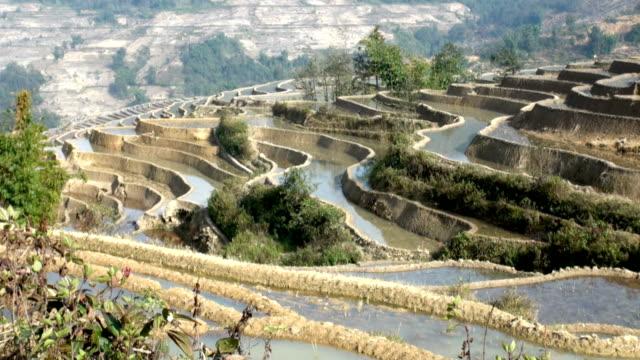terraced rice field Yuanyang, China video