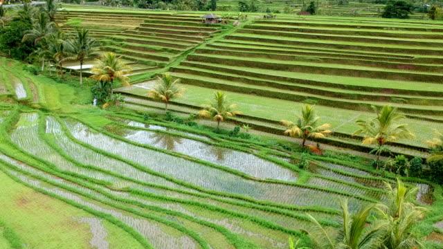 Reisterrassen, Bali, Indonesien – Video