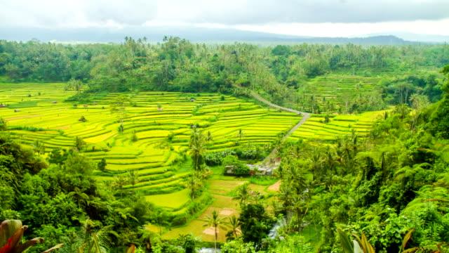 T/L Terraced Rice Fields video