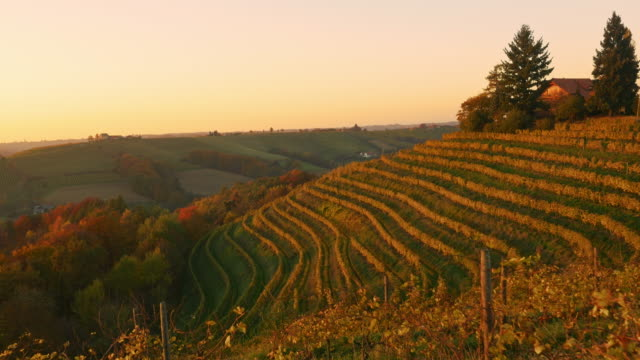 AERIAL Terraced vineyard in the fall video