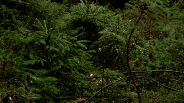 DOF: Terrific impact of deforestation on the environment and wildlife habitat video