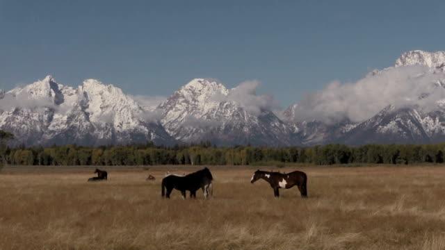 Teton Landscape and Horses video
