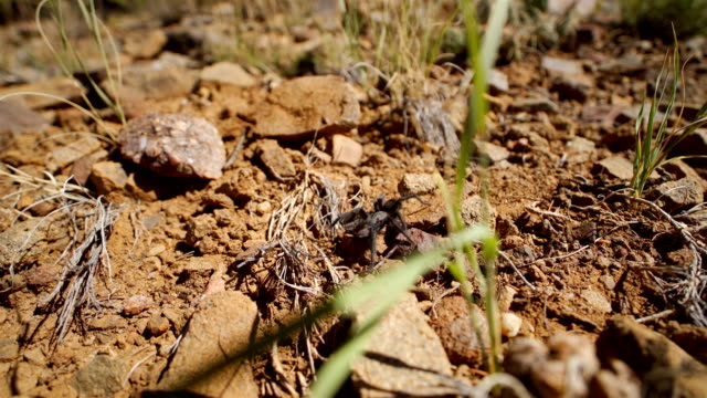 stockvideo's en b-roll-footage met texas bruine tarantula - arizona highway signs